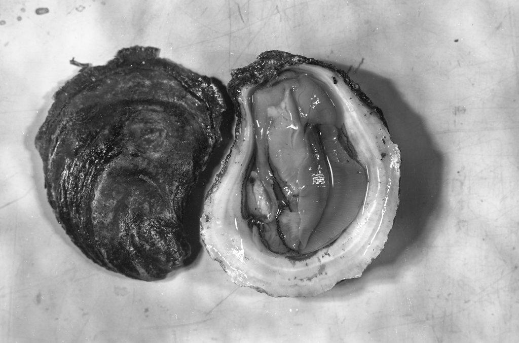 oysters008.jpg